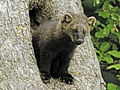 hcl_column_crothers_angela_nature_in_the_little_finger_lakes_2017_02_fisher_wildlife_legend_120x90