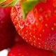 hcl_event_canadice_strawberry_fest_80x80