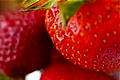 hcl_fair_canadice_strawberry_festival_news_article_1911_120x80